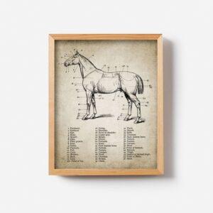 Quadro vintage cavalos