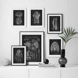 Quadro vintage anatomia